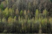 Wyróżnienie w kategorii Krajobraz – Wacław Padowski: Wiosenna grafika