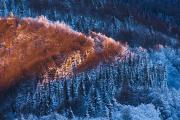 Kompozycja i forma (KF) I miejsce: Bartosz Dubiel - Ciepło – zimno