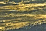 Krajobraz III miejsce: Inka Wieczeńska - Wysycone mgłą