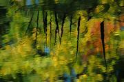 Rośliny, grzyby, porosty (RO) – III miejsce – Anna Węglarz: Barwy jesieni